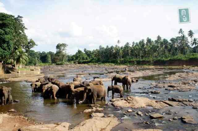 Watching elephants bath, Pinnawala, Sri Lanka
