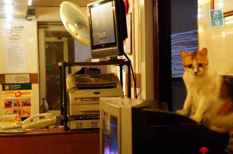 A cute cat sitting on the telly