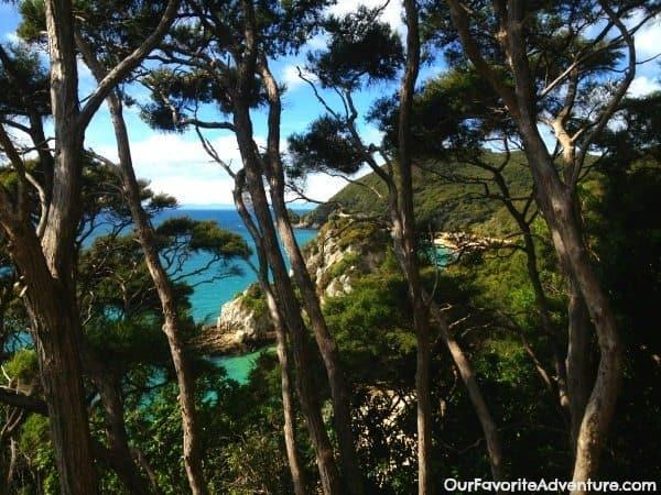 Abel Tasman trees