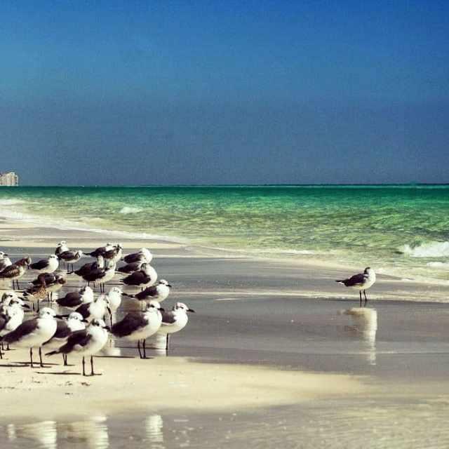 Florida's beach