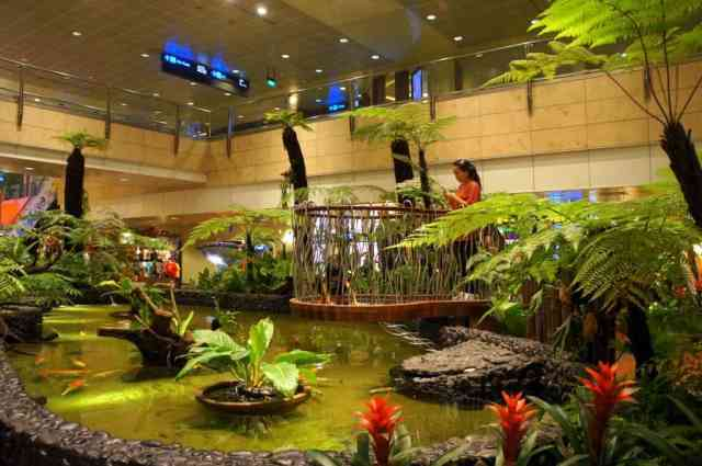 Butterfly Garden in Singapore Airport