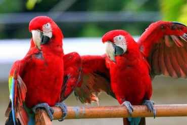 birds-651374_1280