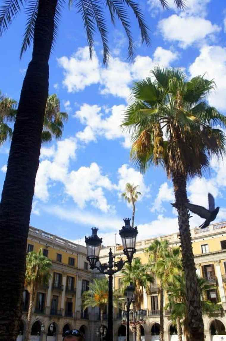 Palmtrees in Barcelona