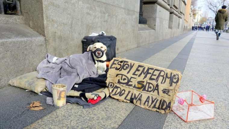 A dog in Madrid