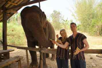 Feeding elephants Agness and Cez of Etramping