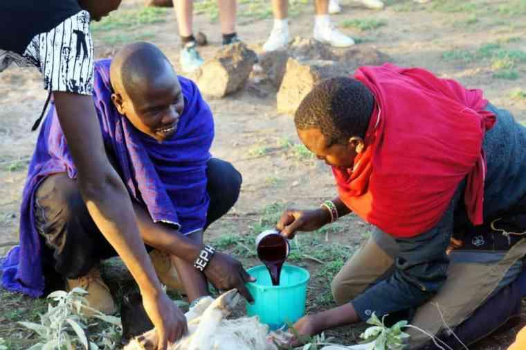 Goat slaughtering at the Maasai village