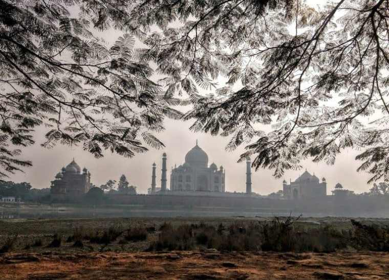 Taj with Greenery