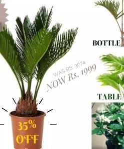 Palm Bundle
