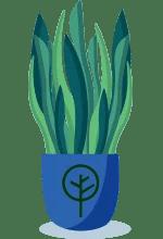 Buy Living room ready plants online in pakistan