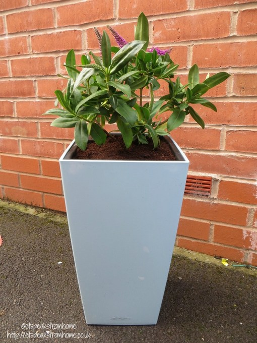 Self Watering Planter From Lechuza Et Speaks From Home