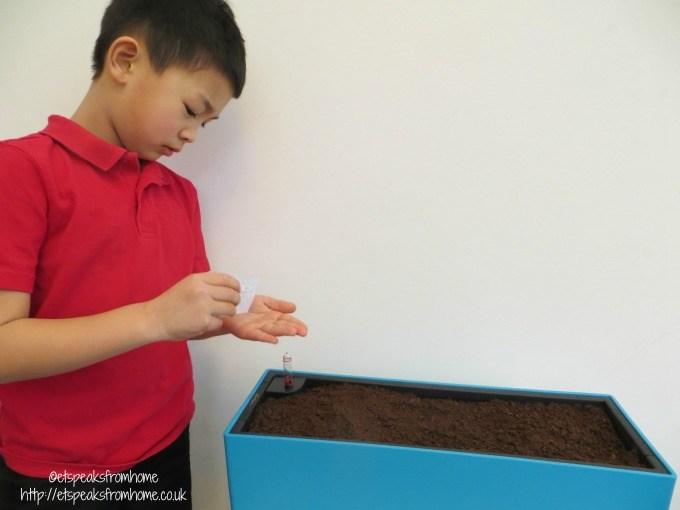Lechuza balconera planting