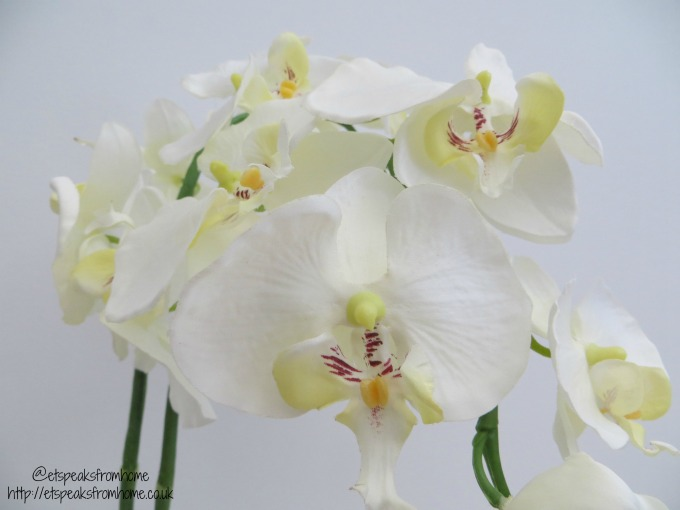 's Day Gifts for Garden Lovers 2017 white orchid