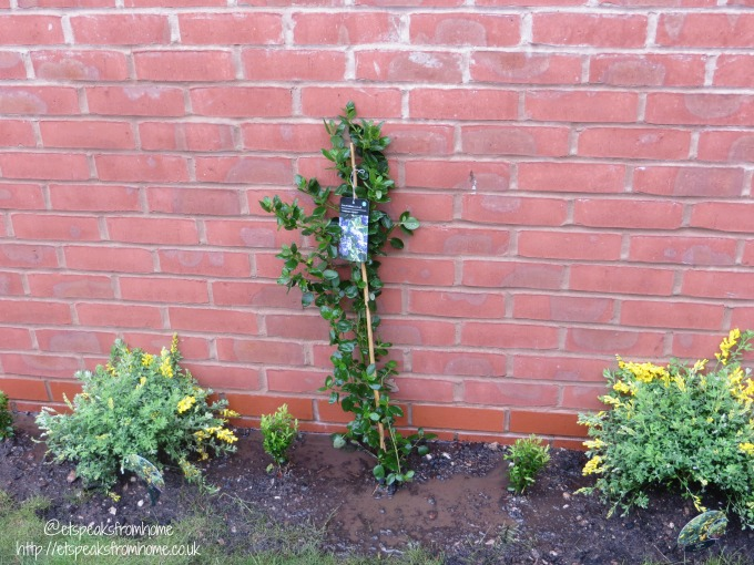 Add colour to my Garden border