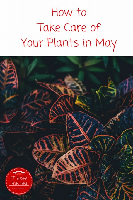 How To Take Care Of Your Plants In May Et Speaks From Home