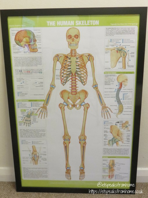 gb posters skeleton