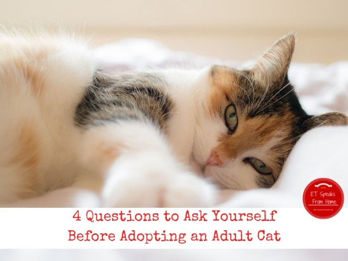 4 Questions to Ask Yourself Before Adopting an Adult Cat