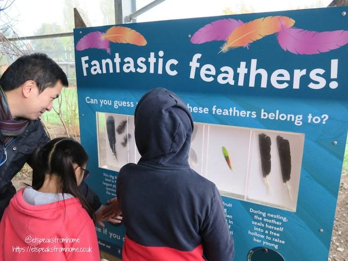 The Great Brick Safari at Twycross Zoo Lorikeet Landing feathers