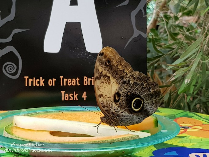 The Great Brick Safari at Twycross Zoo butterfly