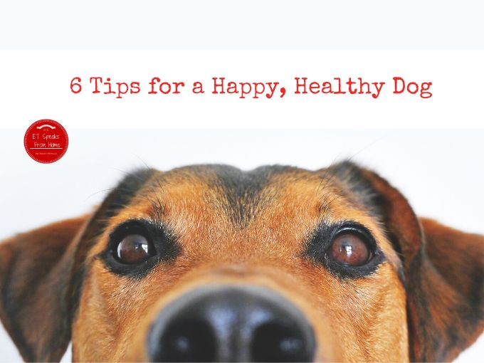6 Tips for a Happy, Healthy Dog