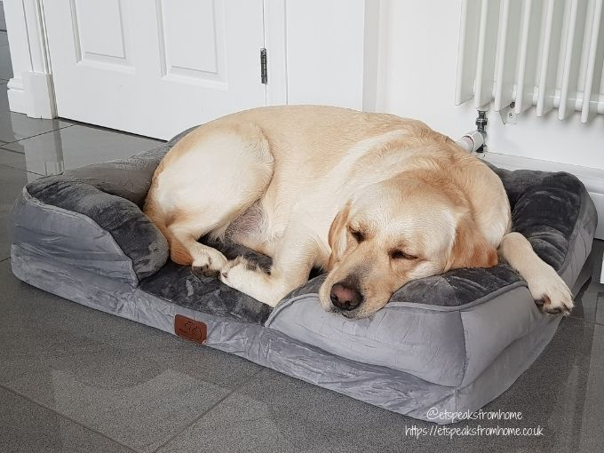 Bedsure Large Dog Sofa Bed dog head on pillow