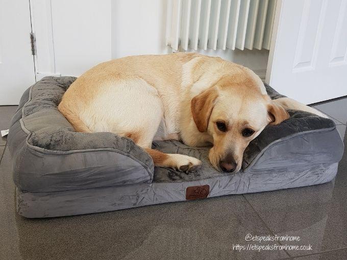 Bedsure Large Dog Sofa Bed dog on corner