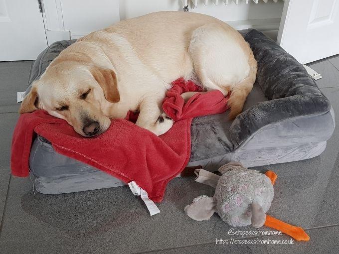 Bedsure Large Dog Sofa Bed dog on pillow
