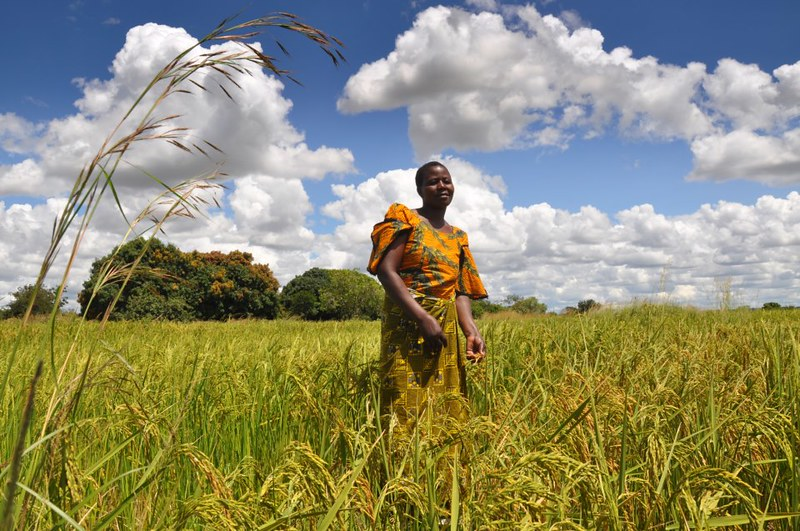 Pandemic brings urgency to transform the world's food system now
