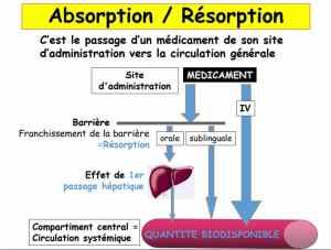 différentes voies d'absorption des médicaments
