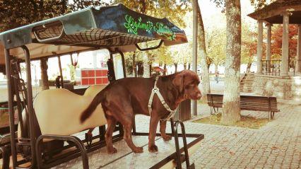 Veículos Amigos dos Animais