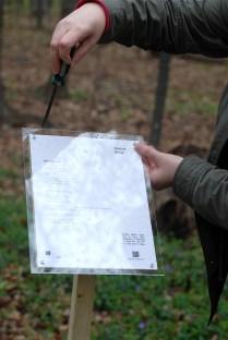 McNair - Katherine Forster putting poem in Montfort woods