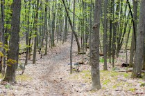 Montfort Woods, trail