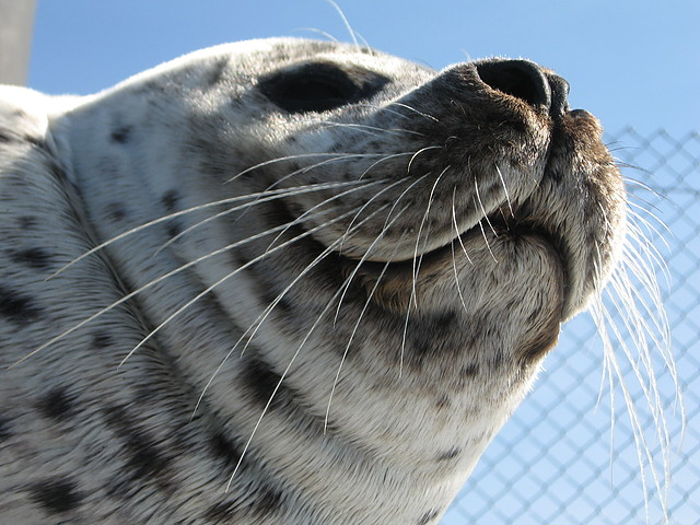 Robbenforschungsstation auf Hohe Düne öffnet für Besucher