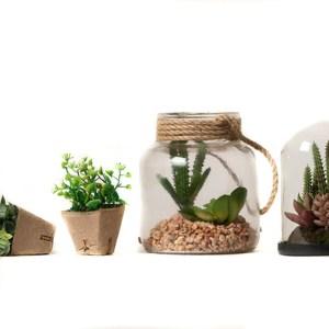 Terrarium verres plantes artificielles Etxe Mia!