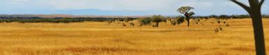 Savannah terrain