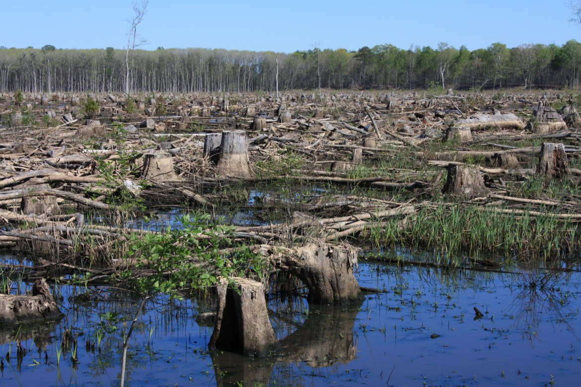 4-us-clearcut-along-side-roanoke-river_bioenergy