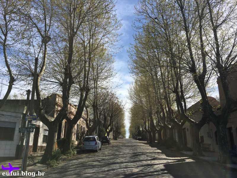 colonia del sacramento uruguai arvores