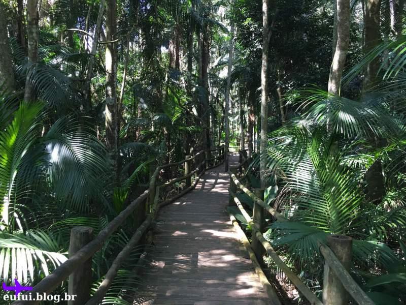 jardim botânico de são paulo trilha