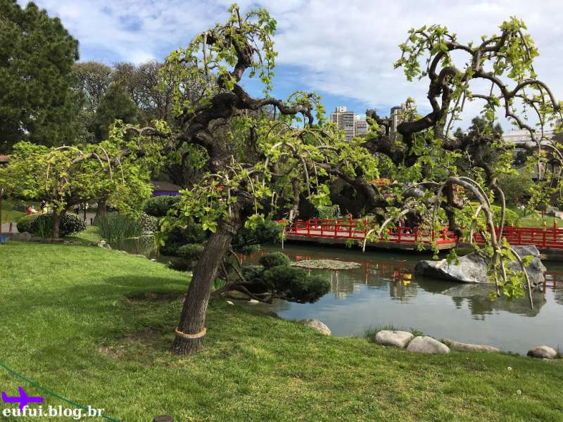 Jardim japones de buenos aires árvore