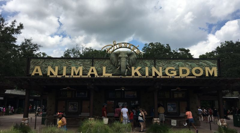 orlando animal kingdom walt disney world