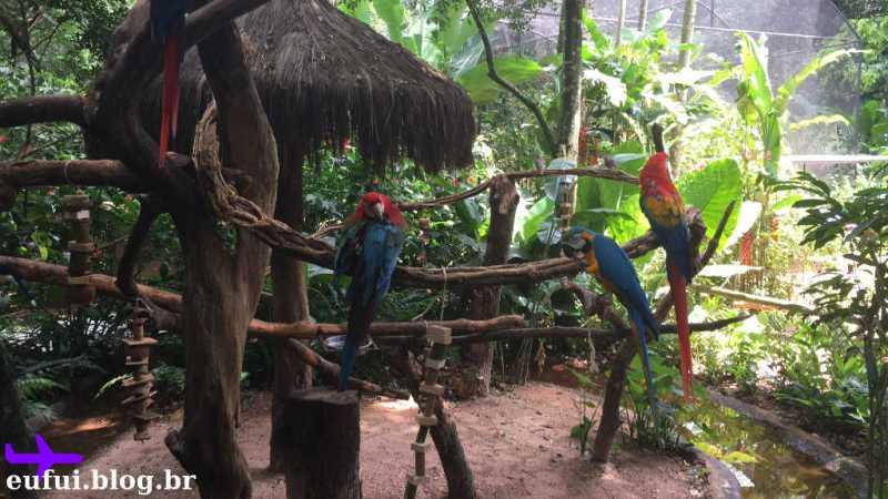 Araras no Parque das Aves em Foz do Iguaçu