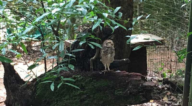 Coruja no Parque das Aves em Foz do Iguaçu