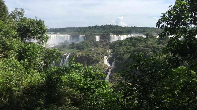 Trilha das Cataratas do Iguaçu - Arvores