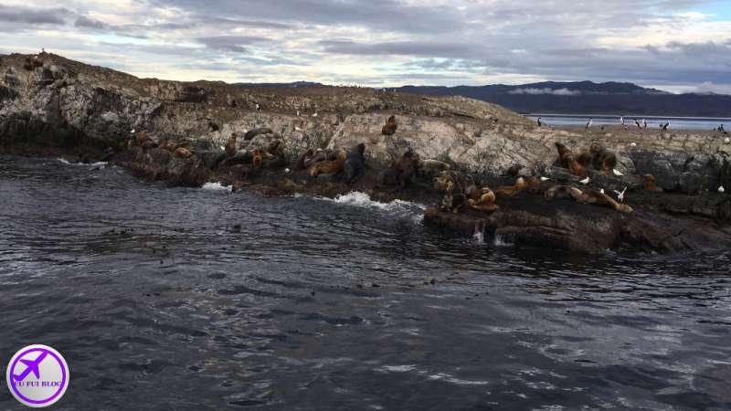 Nvegação Canal do Beagle em Ushuaia - Ilha dos Lobos