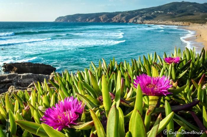 plaja Estoril