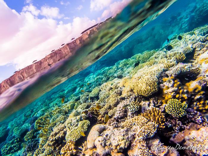 Coral cu cer, Sharm el-Sheikh