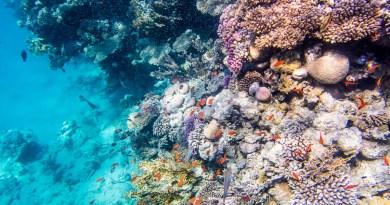 P1021354 2 1 - Snorkeling şi scubadiving în Egipt, de Revelion