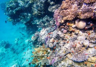 Snorkeling şi scubadiving în Egipt, de Revelion
