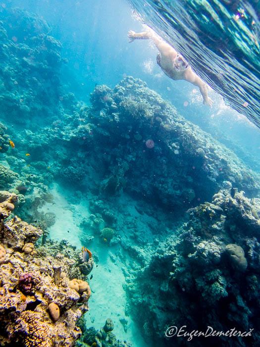 Snorkeling la Sharksbay, Sharm el-Sheikh