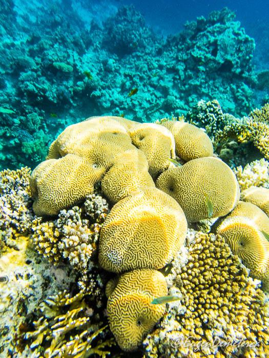Corali in Marea Rosie