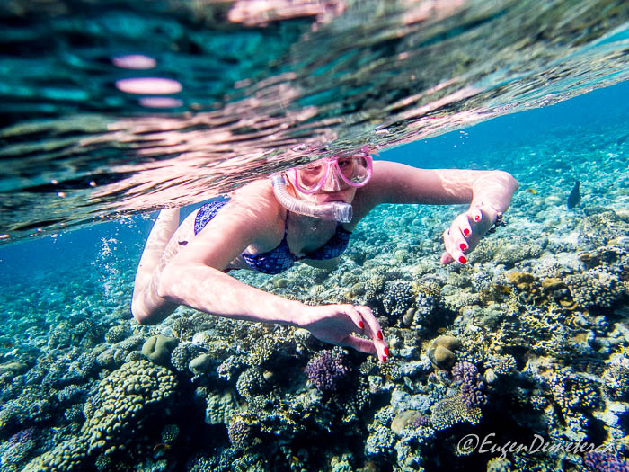 Snorkeling in Marea Rosie, vedere subacvatica